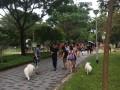 20170708 Longest Dogwalk Line@SHF bishan park (10)