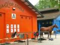 horses19
