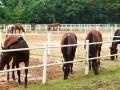 horses22a