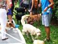 dogbreeds14