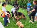 dogbreeds15