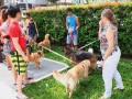 dogbreeds3