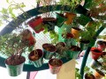 largest-wall-of-plants-in-handpainted-pots-8