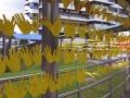 Longest Palmprint Chain