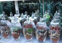 Largest Display Of Terrariums