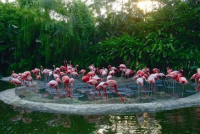 World's Largest Collection Of Flamingos