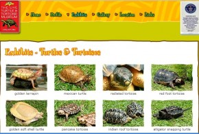 World's Largest Turtles And Tortoises Collection