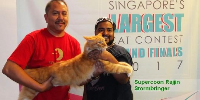Largest Pet Cat