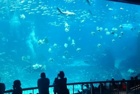 World's Largest Oceanarium