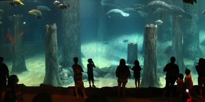 World's Largest Freshwater Aquarium