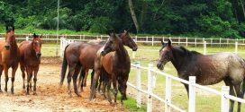 Largest Gathering Of Free Roaming Horses