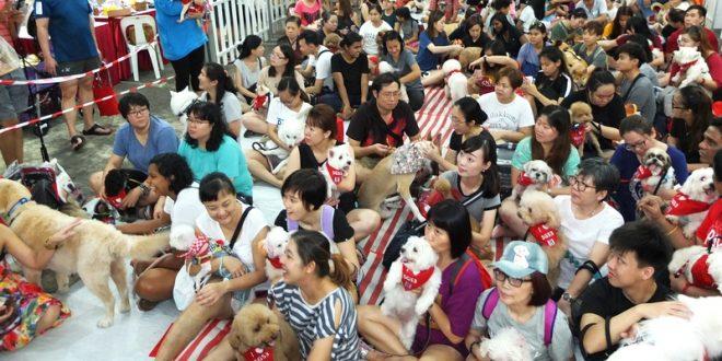 Largest Gathering Of Dogs Wearing Bandanas