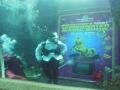 First Underwater Magic Performance