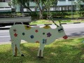 cow-display13