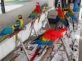 birdflying3