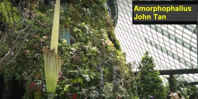 First Successful Hybrid Of World's Largest Flower