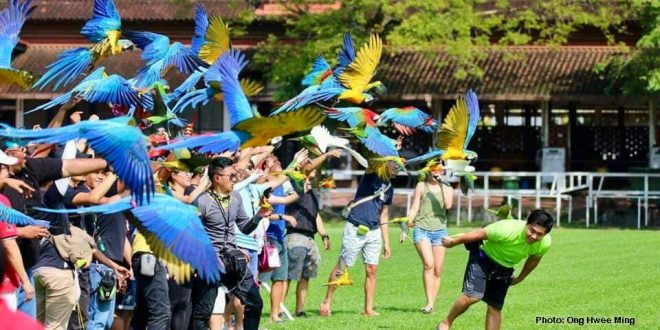 Most Number Of Pet Birds Released At The Same Time