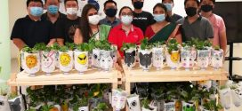 Largest Display Of Plants In Painted Milk Bottles